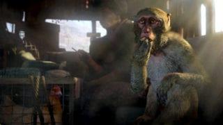 Far Cry 4 Affe