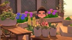 Einige Fische und Insekten verschwinden im Mai aus Animal Crossing New Horizons