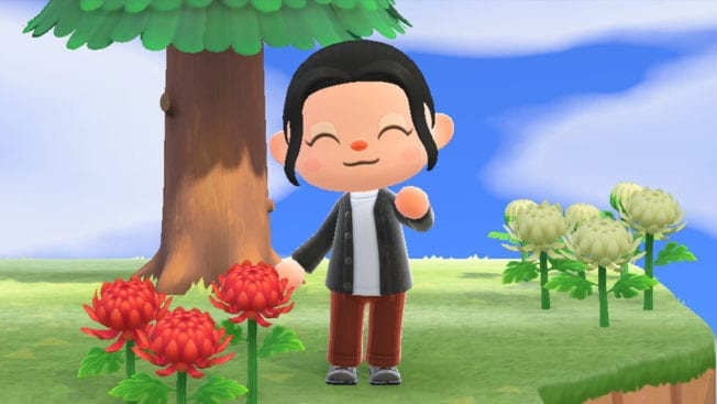 Animal Crossing New Horizons Februar neu