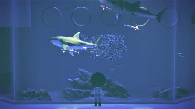 Animal Crossing New Horizons Juni Hai Fische Insekten