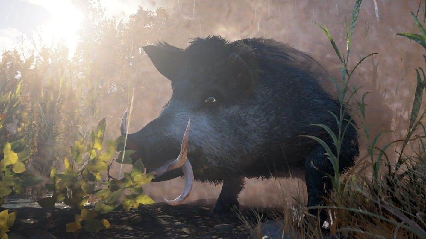 AC Valhalla Blutschwein